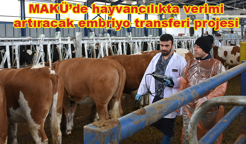 MAKÜ'de hayvancılıkta verimi artıracak embriyo transferi projesi