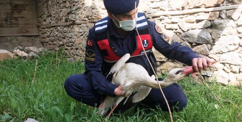 Jandarma, yaralı leyleği kurtardı